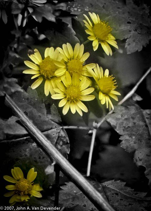 Flowers, B&W,10-17-2007-1