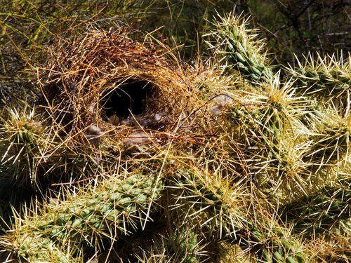 Nest_P5233168