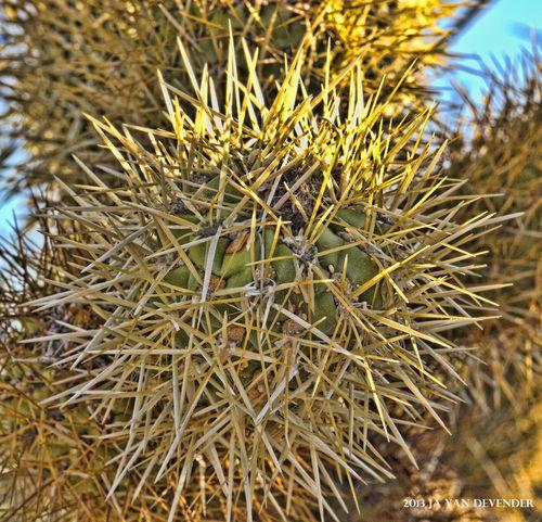 Needles_P5243197