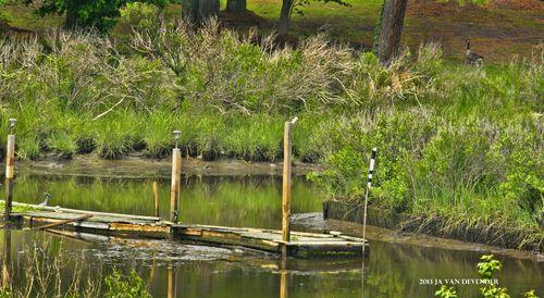 Swamp_P5122949