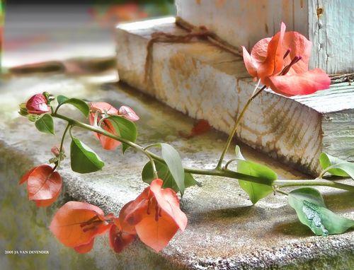 Flower&Post_DSCF0920