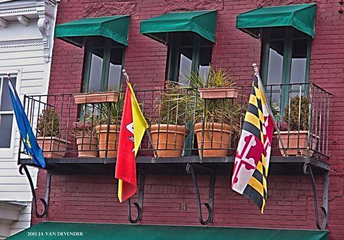 Balcony&Plants_P2052471