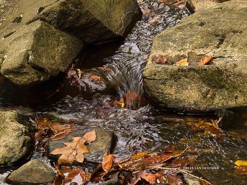 Flowing Leaves_SignedPA195638