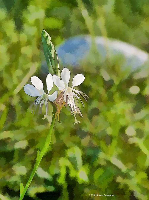 FlowerSketch_4218580
