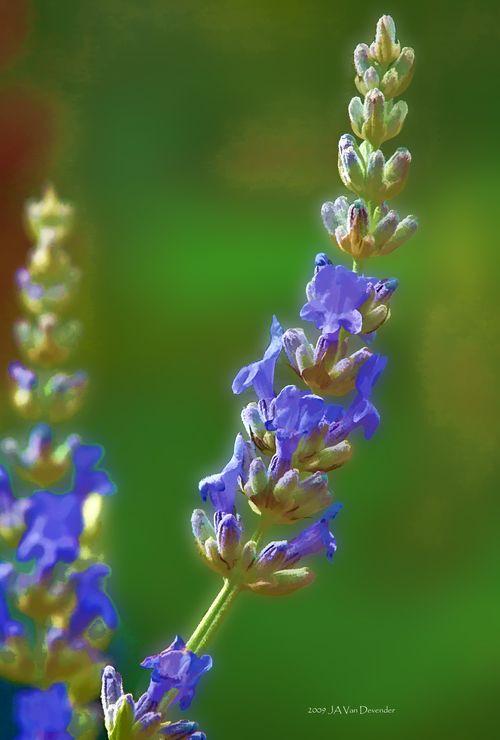 Flower2_stylized_5285225