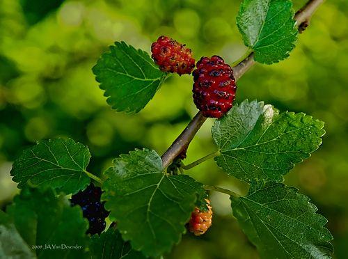 BerryGood_P6071023