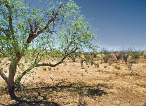 DesertScene_P5243264