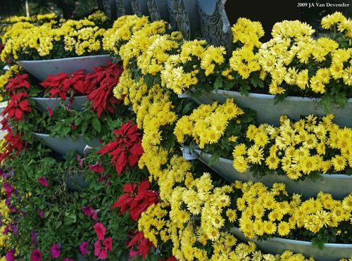 Flowers_Inchon_10-17-2007 11-29-52 AM_372