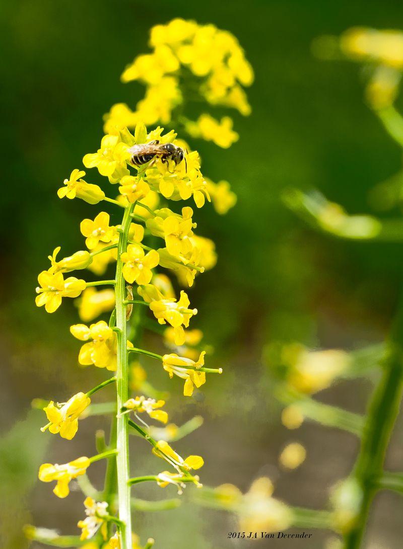 Flower&Bee2_P5050023