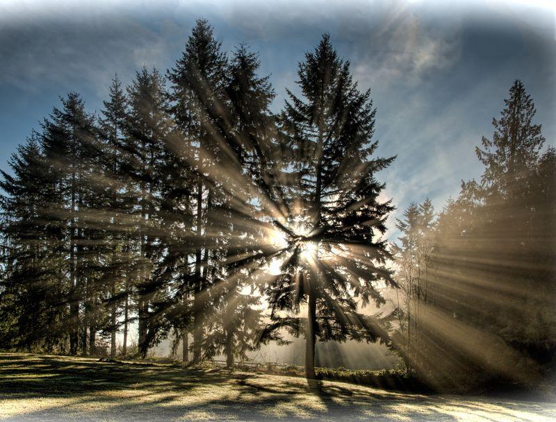 Wednesday_morning_god_rays_00460_1_2_3_4_tonemapped_framed_with_a_white_vignette