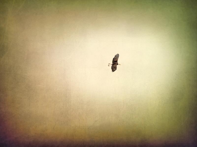 Eagles Wings_0P270128