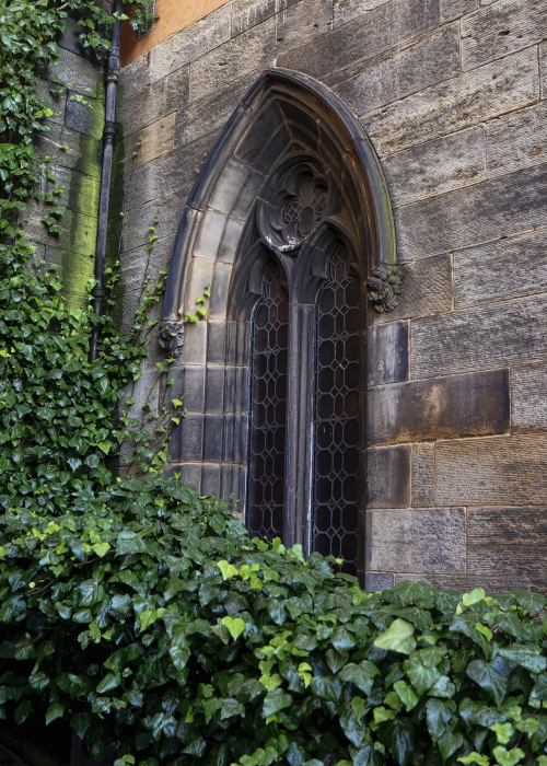 Window&Ivy_P9160018