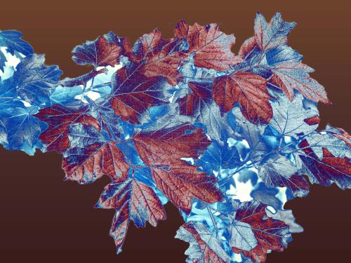 Leaf Patterns_0P290003