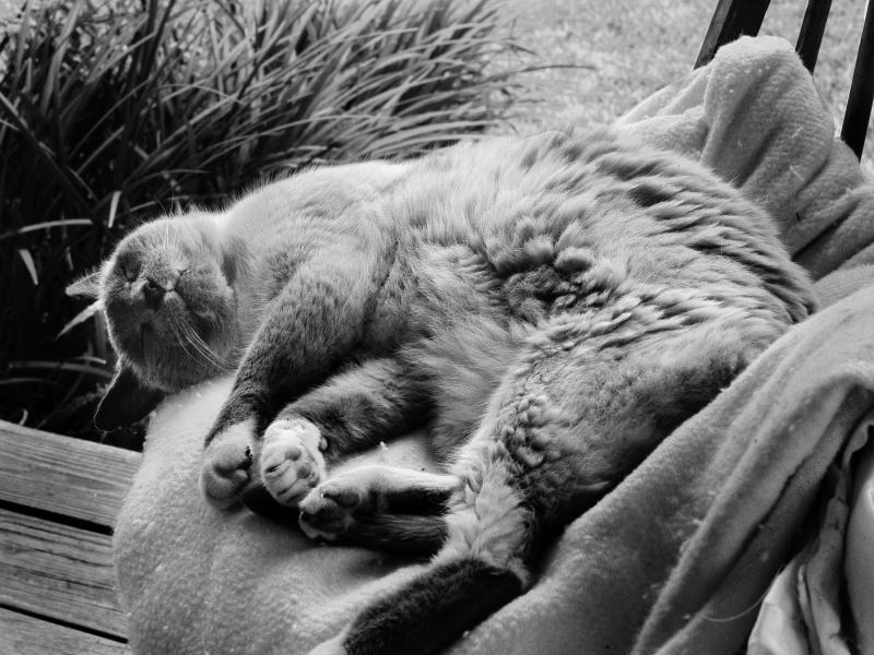 Cat01_0P050011