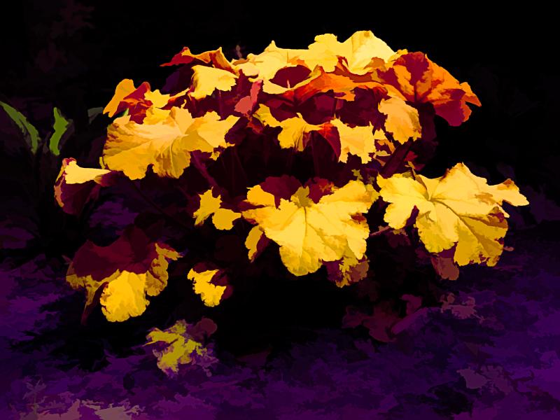 Pretty Plant_Artistic_0P250005