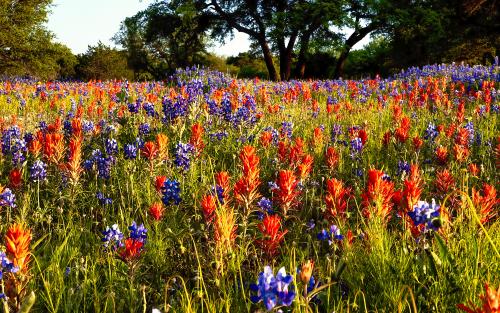 Texas_4208525