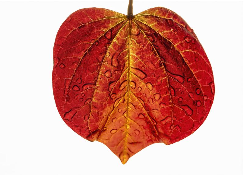 Leaf01_P5220015