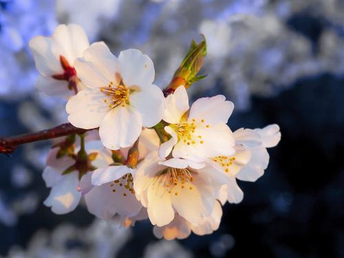 Spring_4028450