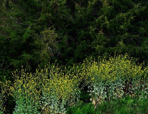 Yellow Green_0P060176