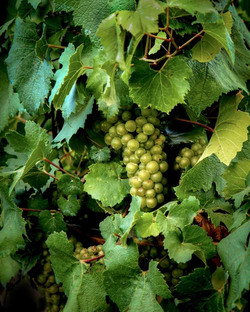 Grapes of Wrath-2_AV142174
